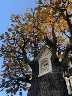 木の前の時計塔の写真・画像素材[2888318]