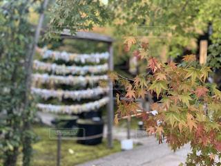 秋の始まりの写真・画像素材[2880001]