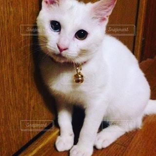 猫の写真・画像素材[110837]