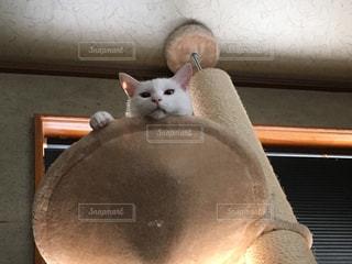 猫が好きの写真・画像素材[200711]