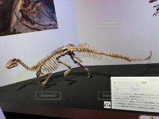 恐竜のカセキの写真・画像素材[2882920]