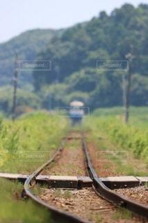 緑色の畑のクローズアップの写真・画像素材[2917206]