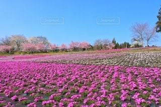 花畑のクローズアップの写真・画像素材[2918379]
