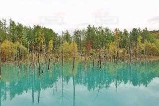 木に囲まれた水の体の写真・画像素材[2926373]