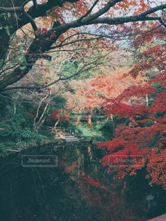 鎌倉の紅葉の写真・画像素材[2884479]