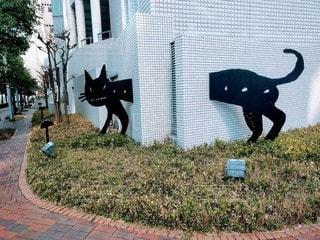 大阪西梅田・黒猫の写真・画像素材[2887511]