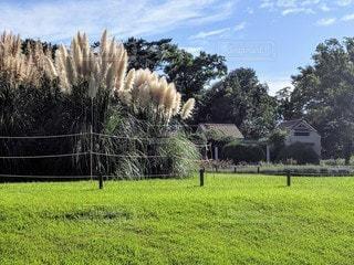 パンパスグラスと芝生の広がる公園の風景の写真・画像素材[2887679]