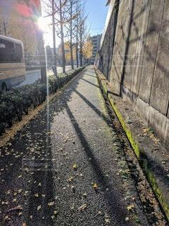 銀杏並木の街並みの写真・画像素材[2887753]