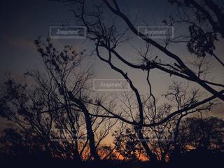 闇が潜む森の写真・画像素材[2885582]