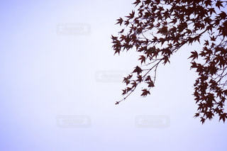 空と紅葉の写真・画像素材[2885776]