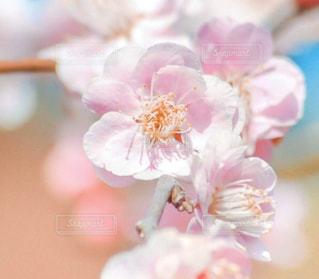 花のクローズアップの写真・画像素材[2894693]