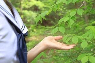 お散歩森林浴の写真・画像素材[4452131]