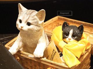 かごの中に座っている猫の写真・画像素材[2888961]