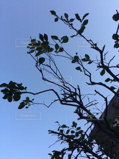 木切り絵のような風景の写真・画像素材[2902611]