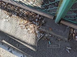 タバコのポイ捨ての写真・画像素材[3819930]