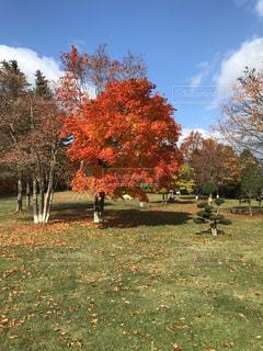 畑の真ん中にある木の写真・画像素材[2889030]