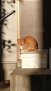 寒そうな野良猫の写真・画像素材[2890172]