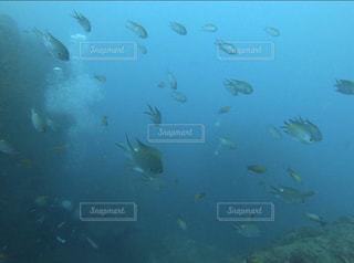 南紀白浜の海底で魚の群れと遭遇しました*の写真・画像素材[2890089]