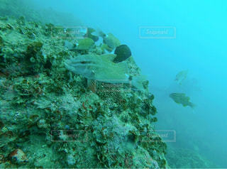 ダイビングで出会った魚の写真・画像素材[2890125]