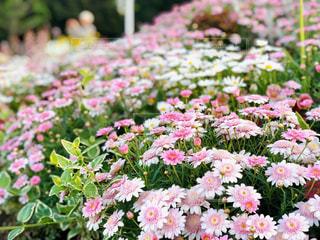 花畑のクローズアップの写真・画像素材[2890129]