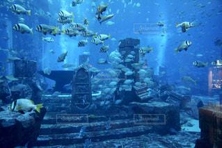 スイミングプールの水中ビューの写真・画像素材[2891844]