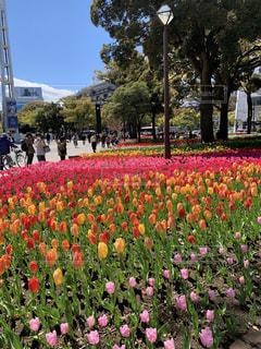 春の横浜スタジアムの写真・画像素材[2894072]