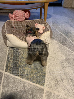 敷物の上に横たわっている犬の写真・画像素材[2893396]