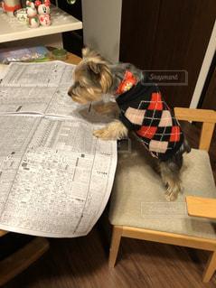 新聞を読む犬の写真・画像素材[2894333]