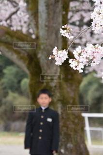 桜と入学式の写真・画像素材[3866938]