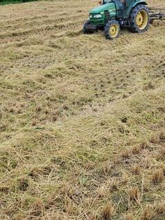 緑の畑のクローズアップの写真・画像素材[4774404]
