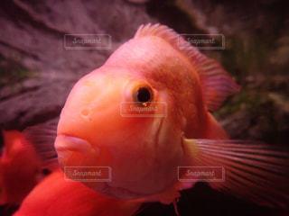 すごく近い!魚の写真・画像素材[2897775]
