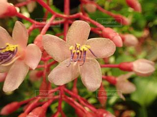 ピンクの花の写真・画像素材[2960052]