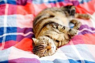 猫の写真・画像素材[111200]