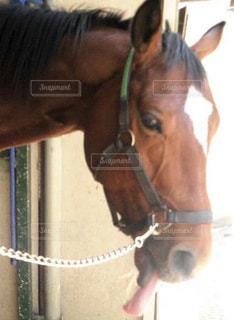 馬のクローズアップの写真・画像素材[2899714]