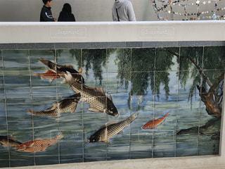 鯉のタイルの写真・画像素材[2902015]