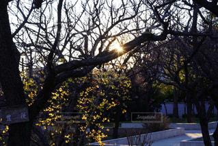 木のクローズアップの写真・画像素材[2914112]