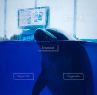 イルカの写真・画像素材[2937396]