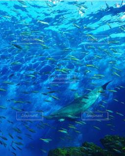魚達と泳ぐイルカの写真・画像素材[2942154]