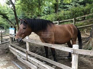 フェンスの隣に立っている茶色の馬の写真・画像素材[2914220]