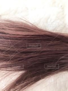 ピンクのヘアカラーの写真・画像素材[2903545]