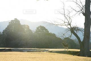 日の出と鹿の写真・画像素材[2918439]