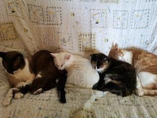横たわっている猫の写真・画像素材[2961661]