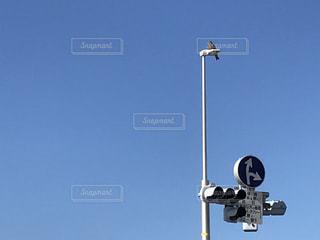 鳥と信号機の写真・画像素材[2919526]