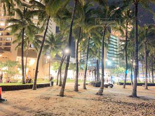 夜のビーチのヤシの木の写真・画像素材[2923481]
