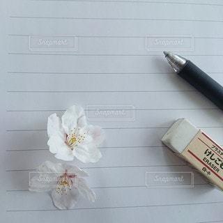 桜の花と手紙の写真・画像素材[3067082]