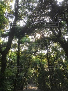 自然 - No.111486