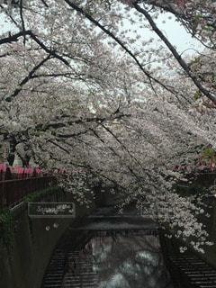 春の写真・画像素材[111658]