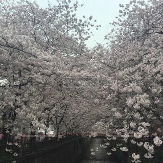 春の写真・画像素材[111662]