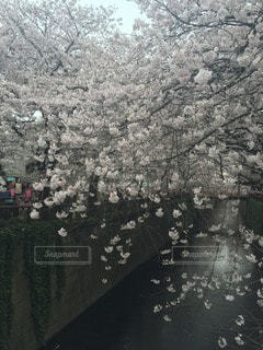 花の写真・画像素材[111663]