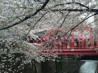 春 - No.111718